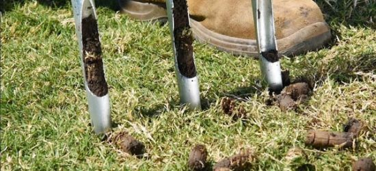 Lawn Aeration – The Complete Guide