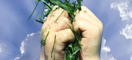 How To Use Your Lawn Clippings