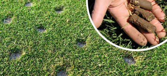 Should You Core Your Lawn?