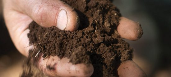 Which Soil Is Best For Turf?