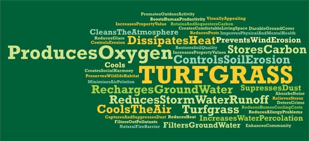 Environment word cloud