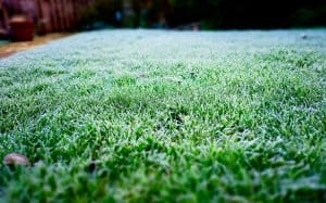 Winter lawn fertilise