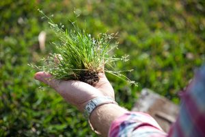 control weeds, weed control, how to control weeds